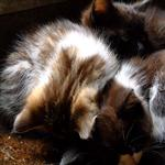 kittings by scott  - 