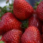 strawberries by scott  - 