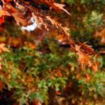 Autumn leaves 1 by scott  - 