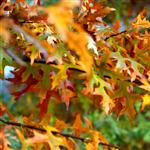 Autumn leaves 2 by scott  - 