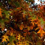 Autumn leaves 3 by scott  - 