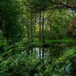 Tiergarten by scott  - 