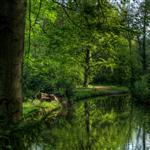 Tiergarten in Spring by scott  - 